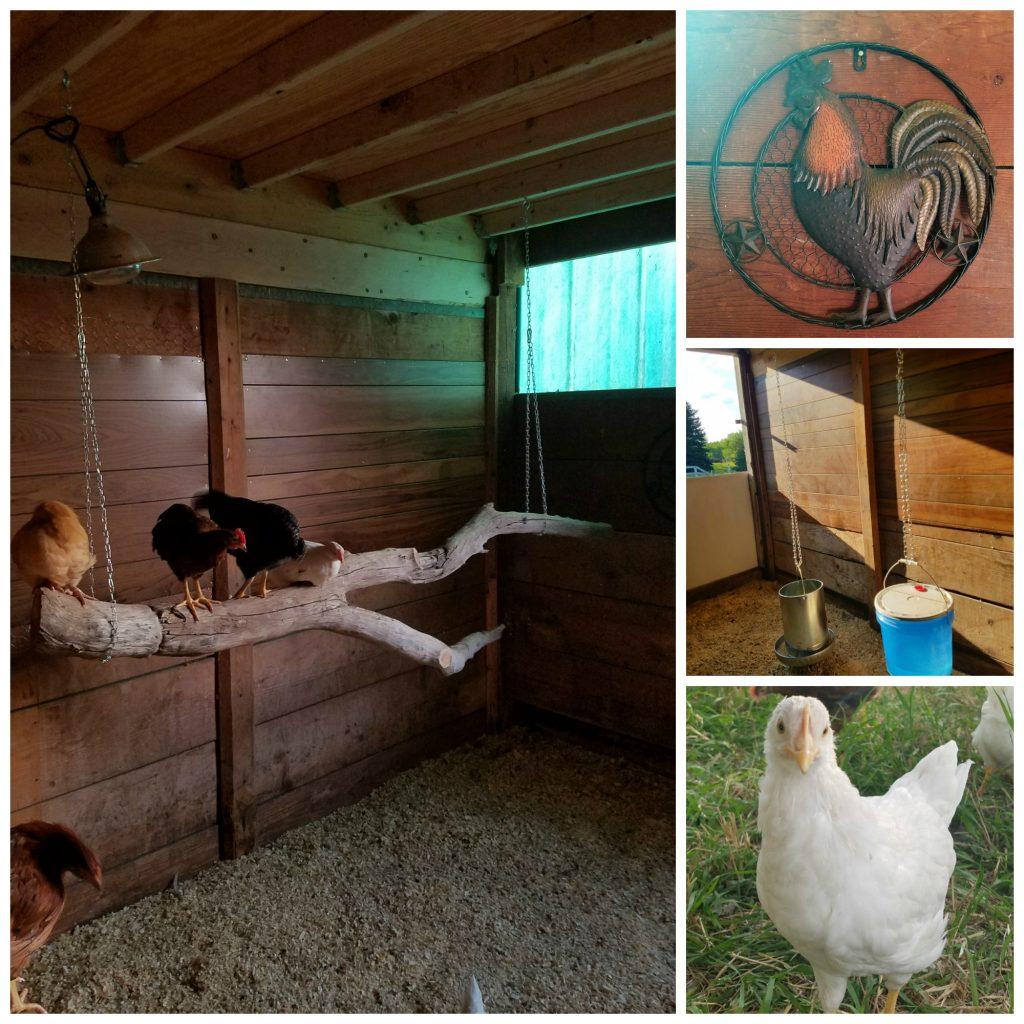 barn stall chicken coop