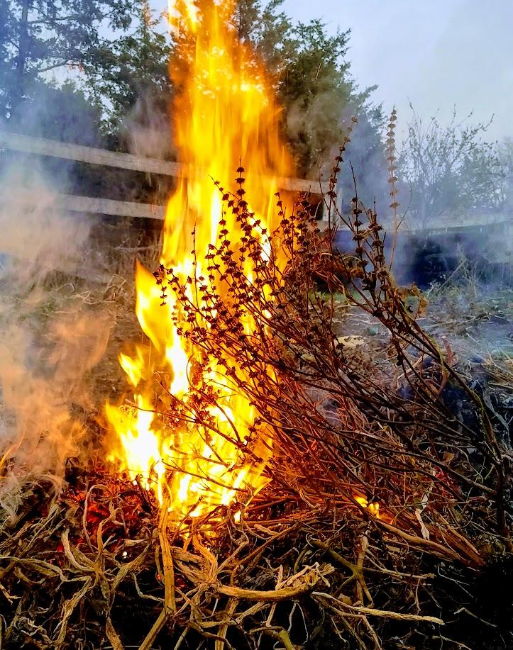 burning weeds