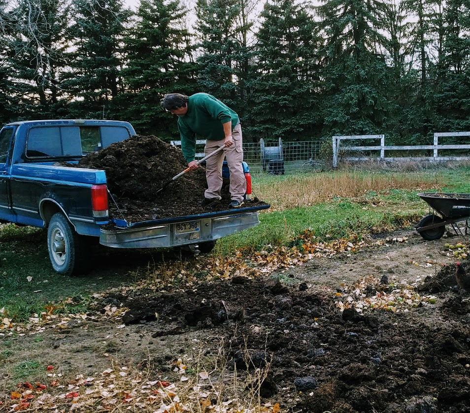shoveling manure onto garden