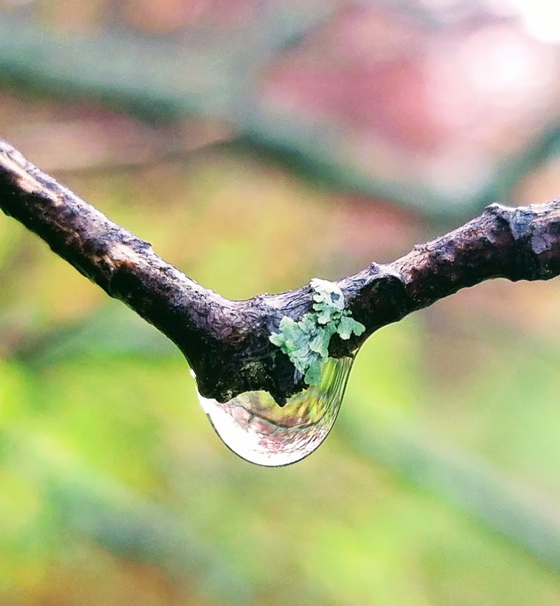 rain drop in forest