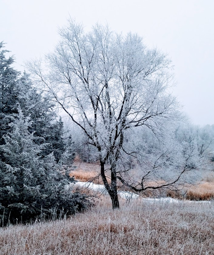 winter tree in meadow
