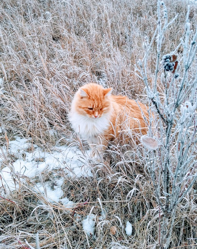 orange kitty in snowy field