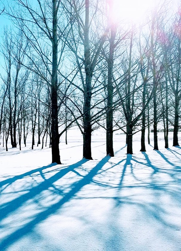 winter tree shadows on snow